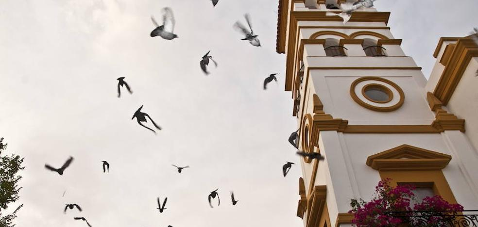 Los vecinos de Pardaleras colocarán jaulas para reducir la población de palomas