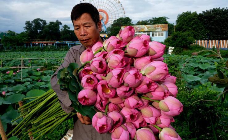 Temporada de Lotos en Vietnam