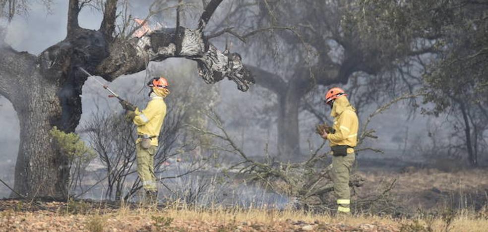 Arden 160 hectáreas en un incendio forestal en Tres Arroyos
