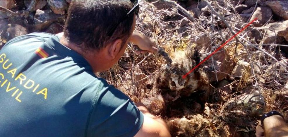 Investigan a un vecino de Puebla de Alcocer por usar métodos prohibidos para la caza