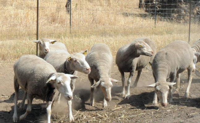 Los ganaderos piden medidas para erradicar la tuberculosis y paliar los efectos de la sequía