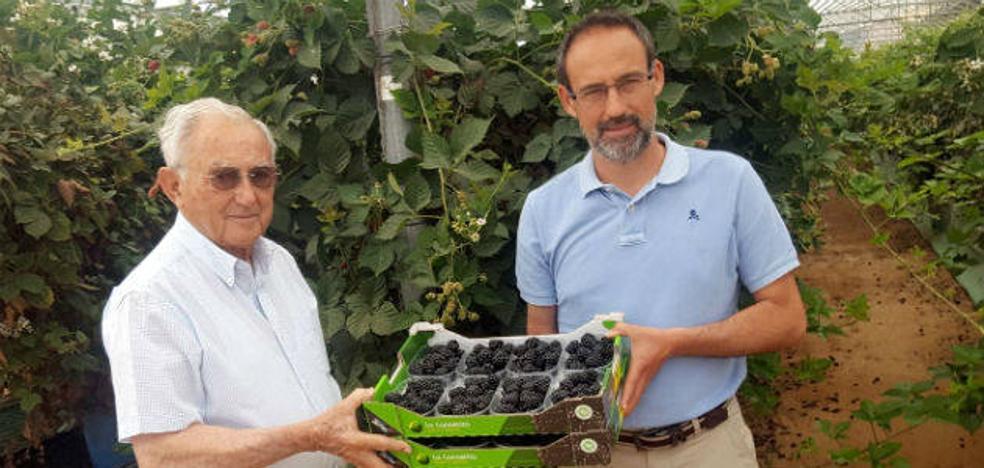 La Canastita llevará sus moras a Asia subida a Plus Berries