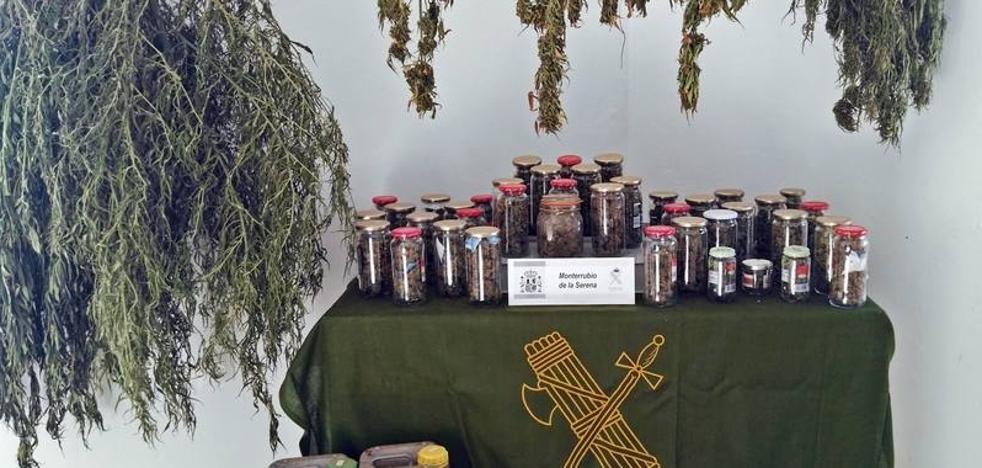Detenido un vecino de Monterrubio de la Serena por cultivo de marihuana
