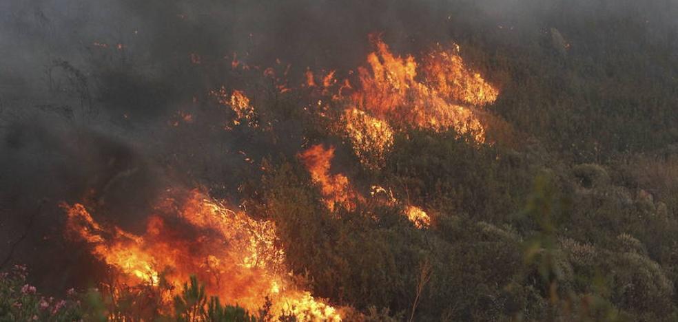 Sólo 22 incendios quemaron la mitad de la superficie calcinada en 2016