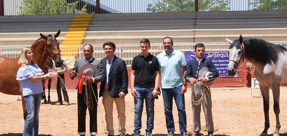 La Yeguada Rosa de Villanueva, mejor ganadería expositora en Salamanca