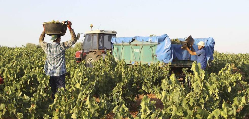 La escasez de lluvias y el calor mermarán la producción de la vendimia en Extremadura, según Asaja