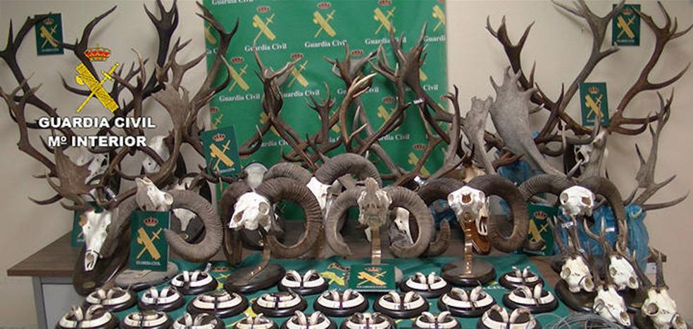 Desarticulado en Cáceres un grupo criminal dedicado a la caza furtiva y la taxidermia
