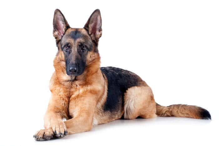 Los perros preferidos por los extremeños
