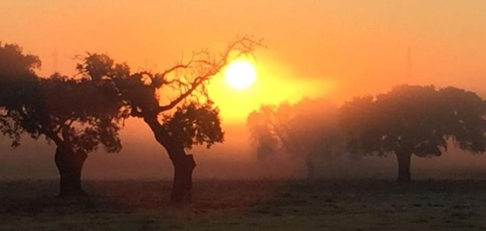 José Luis Gil Soto: Amanecer de hierba seca