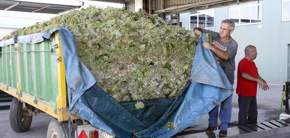Inquietud entre los viticultores porque no saben a qué precio venderán la uva