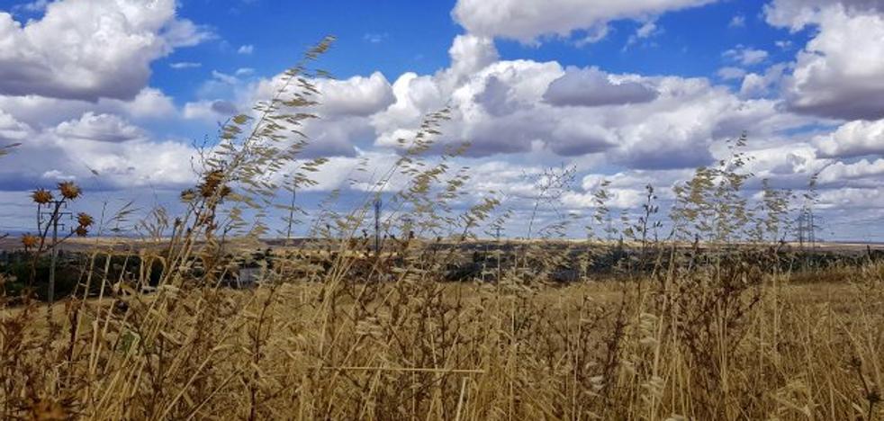 Carmen Hernández Zurbano: La hierba cruje