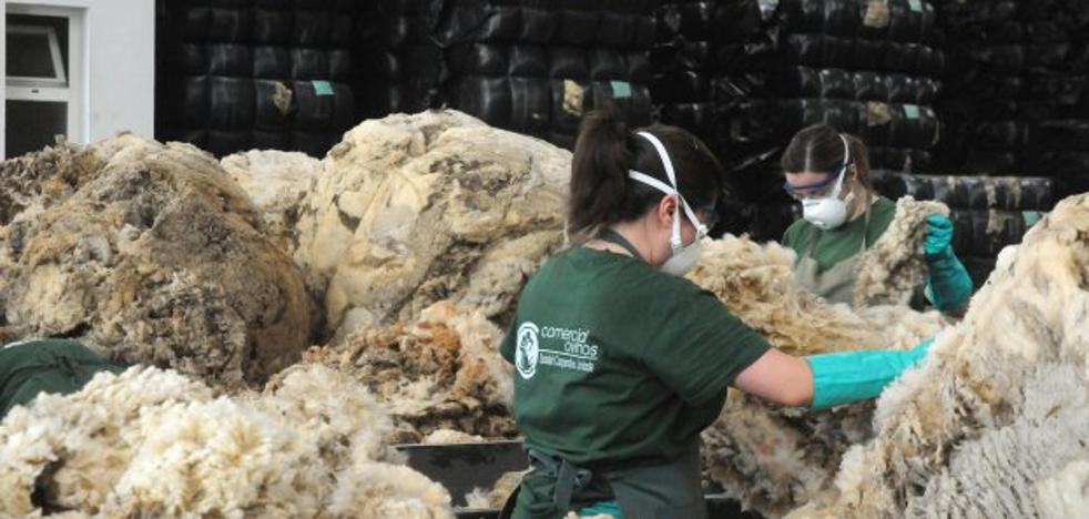 La lana extremeña se revaloriza por el interés de las firmas textiles y de calzado