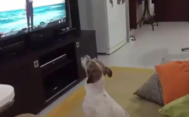 El perro fan de despacito