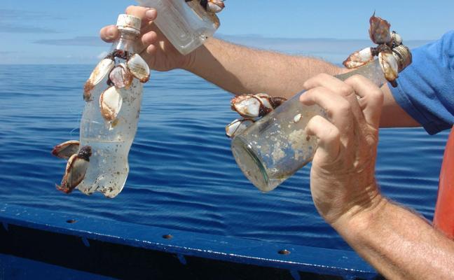 El móvil, un aliado para limpiar los mares
