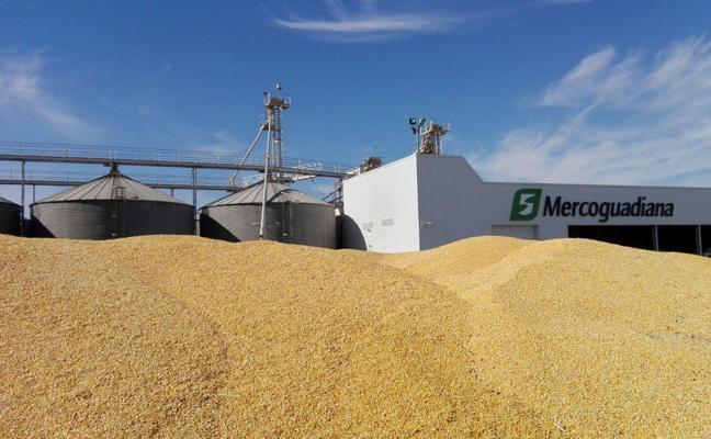 Extremadura dispondrá de 60.000 hectáreas para la campaña del maíz