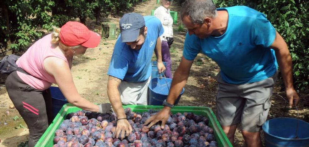 El PSOE presenta ante la Asamblea propuestas en defensa del sector frutícola