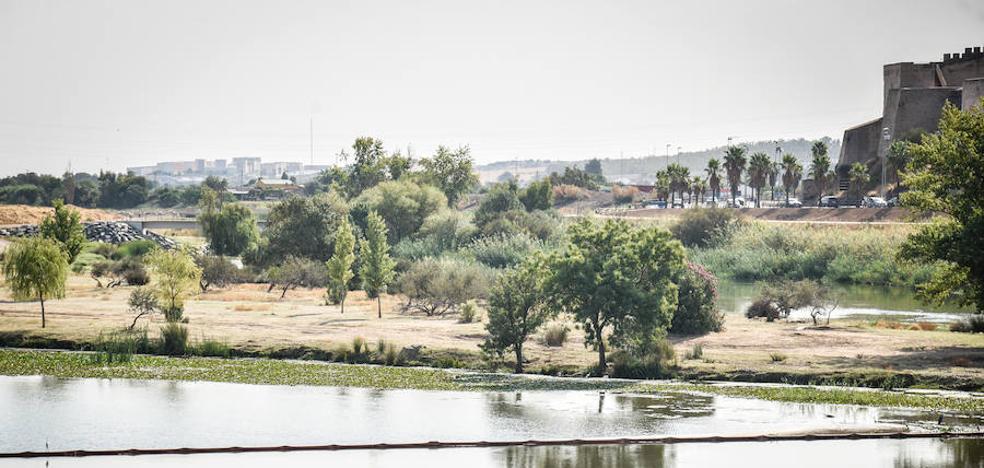 Las barreras libran al tramo urbano del Guadiana del camalote