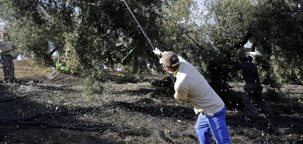 La Fiscalía pide cárcel para un agricultor que no dio de alta a 92 trabajadores
