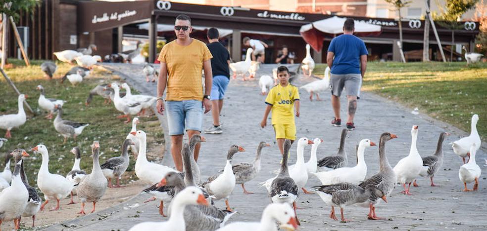 Badajoz busca cómo reducir el exceso de aves en el parque del río
