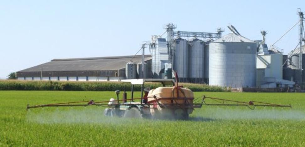 El cultivo del arroz extremeño paga 7,5 millones más a Hacienda que el tomate