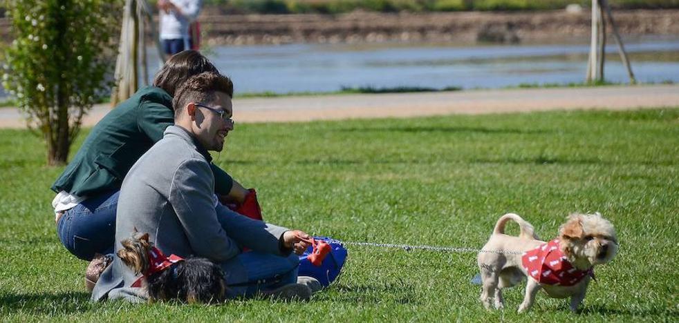 El parque canino de Badajoz tendrá 7.000 metros cuadrados junto al Puente Real