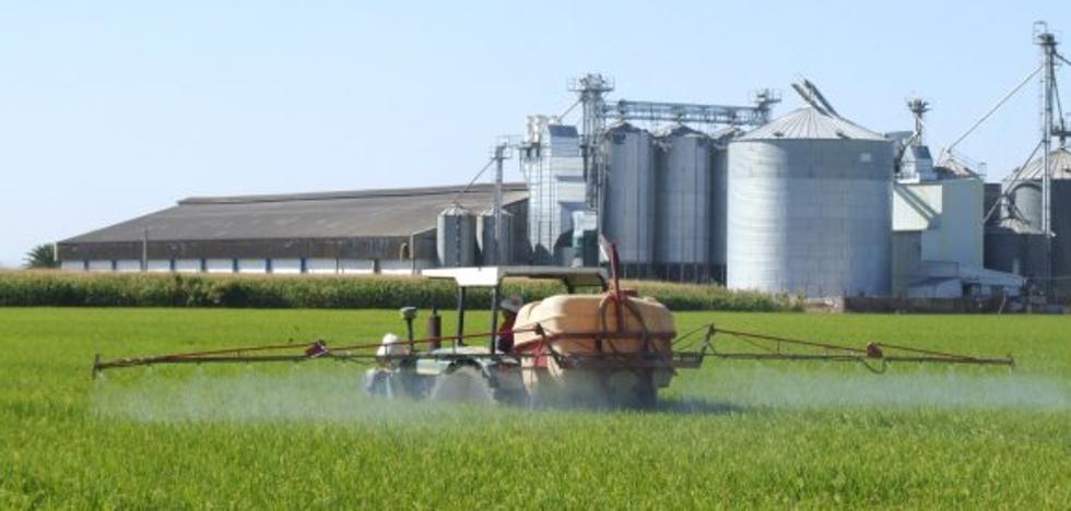 La Asamblea pide que Junta y Gobierno defiendan el arroz comunitario ante la Unión Europea