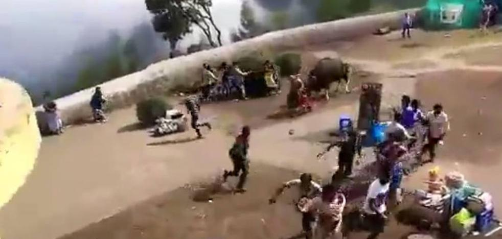 El ataque de un bisonte