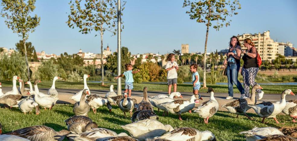 SEO BirdLife propone buscar vecinos que acojan a los patos del Guadiana