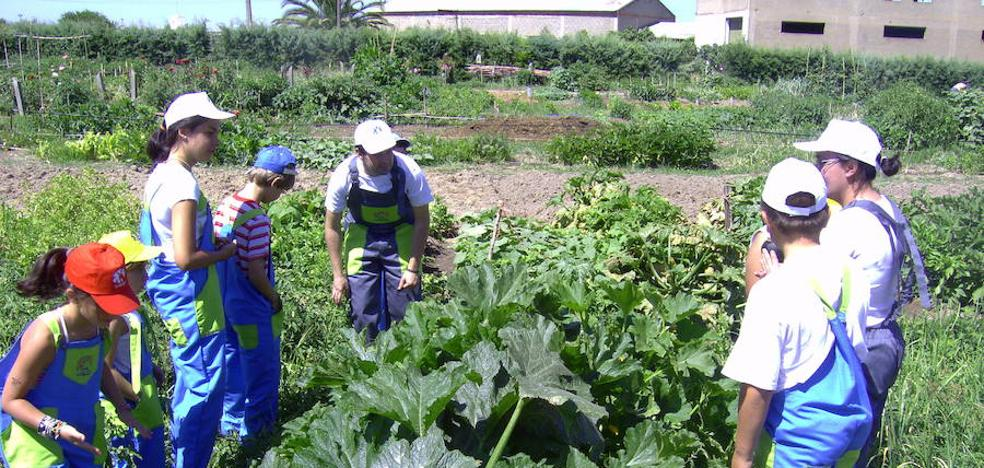 Diez centros educativos extremeños tendrán huertos ecológicos
