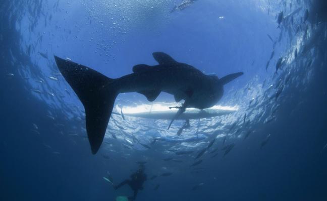 Los animales más grandes y los más pequeños tienen un mayor riesgo de extinción