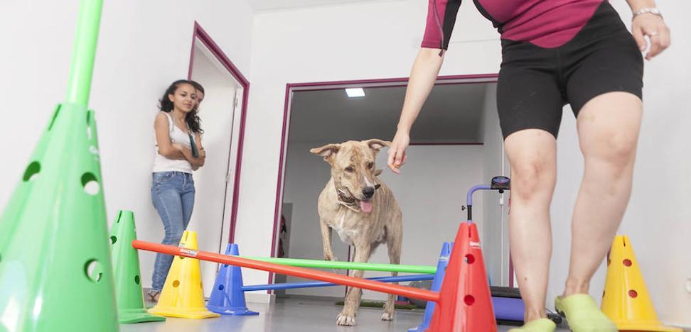 Los perros también van al fisio