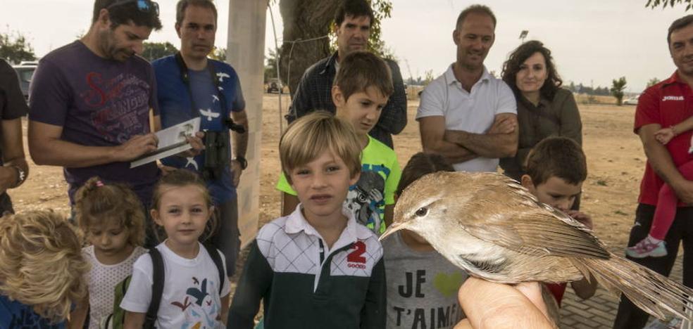 SEO/BirdLife organiza una jornada para conocer las aves del tramo urbano del Guadiana