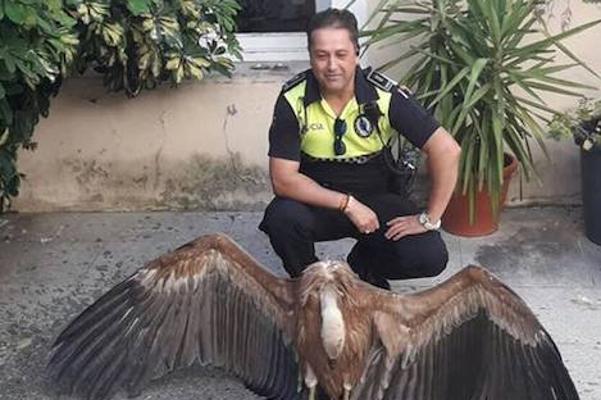 La Policía Local de Badajoz rescata un buitre leonado