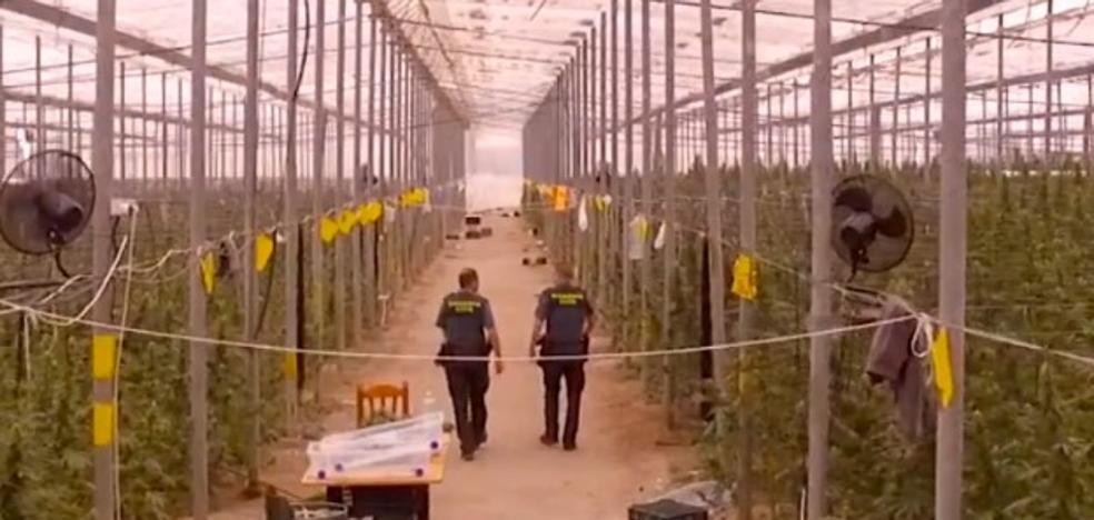 La Guardia Civil encuentra el mayor invernadero de marihuana de España: 41.000 plantas en Almería
