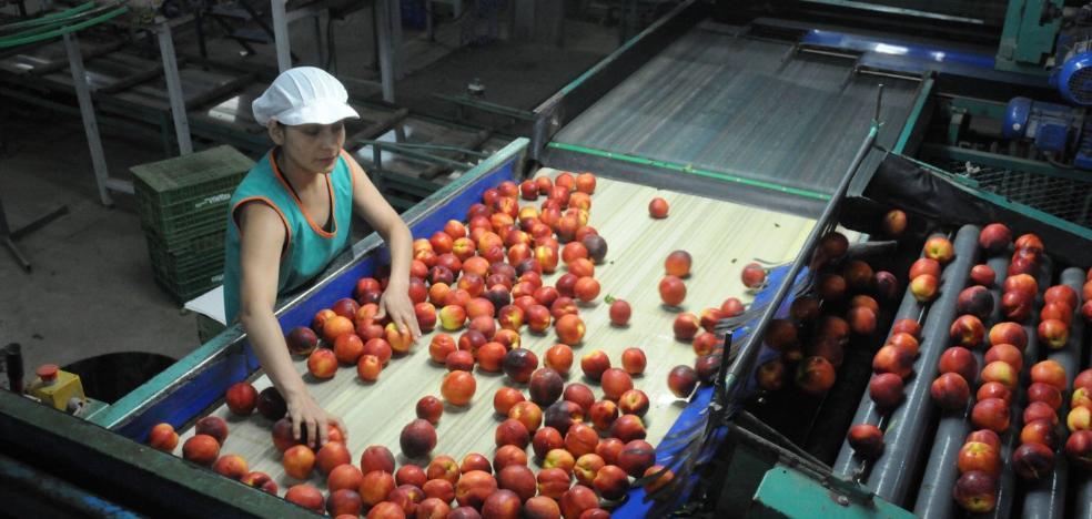 La Junta formará a 700 profesionales del sector frutícola