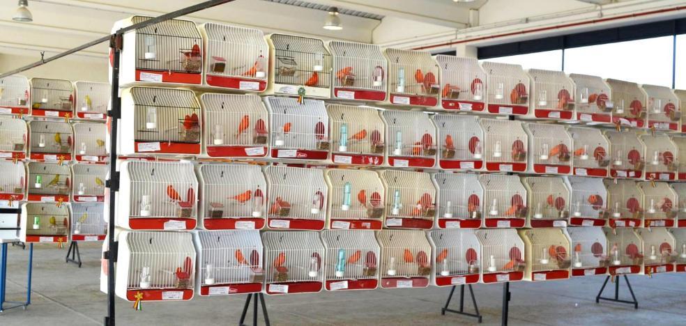 Unos 2.100 ejemplares participan en el Campeonato Regional de Ornitología