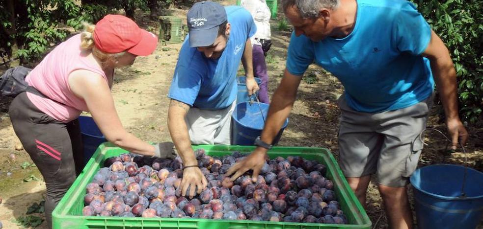 El sector frutícola pide mejoras en el tren para competir con regiones como Aragón o Cataluña