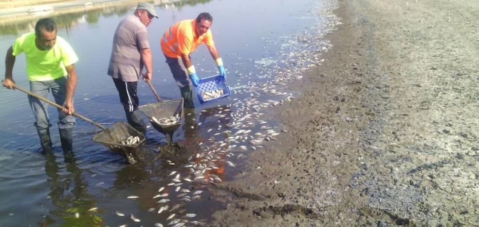 Centenares de peces muertos en la Charca del Lugar por la sequía y las altas temperaturas