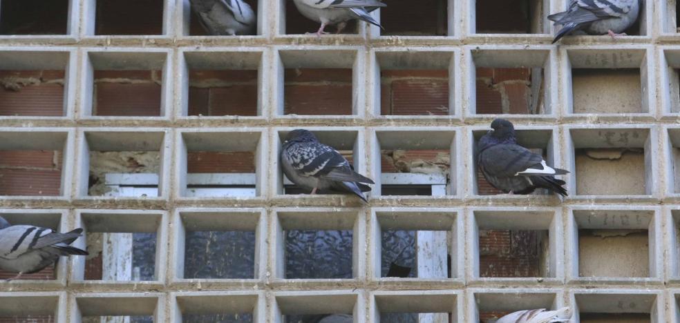 La Asociación de Vecinos de La Antigua denuncia la proliferación de palomas