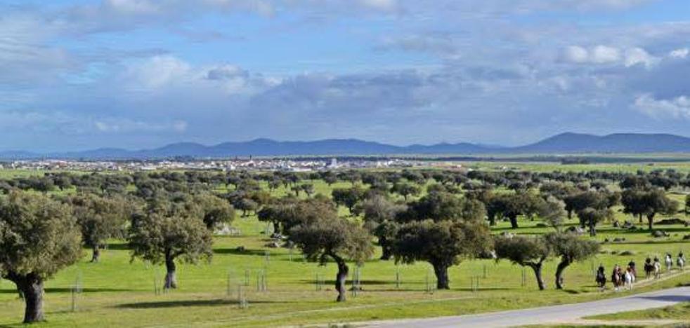 Publicada la convocatoria de las subvenciones para regenerar terrenos adehesados en Extremadura