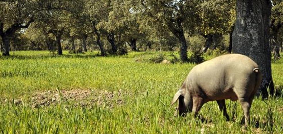 La UE respalda que la PAC considere la dehesa como pastos permanentes