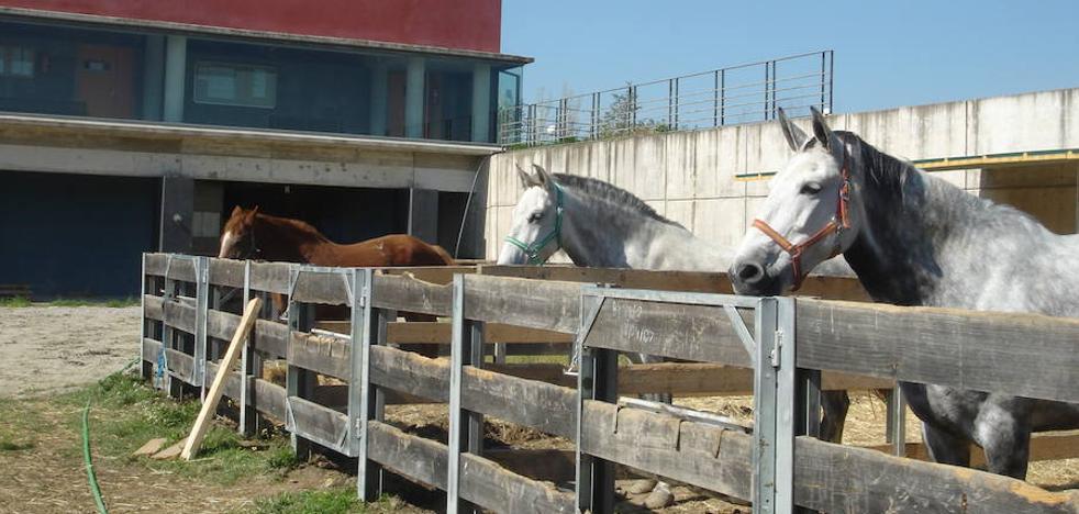 Una mujer resulta herida al ser pisoteada por un caballo en Cáceres