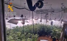 Más de 200 plantas de marihuana intervenidas en Talavera la Real