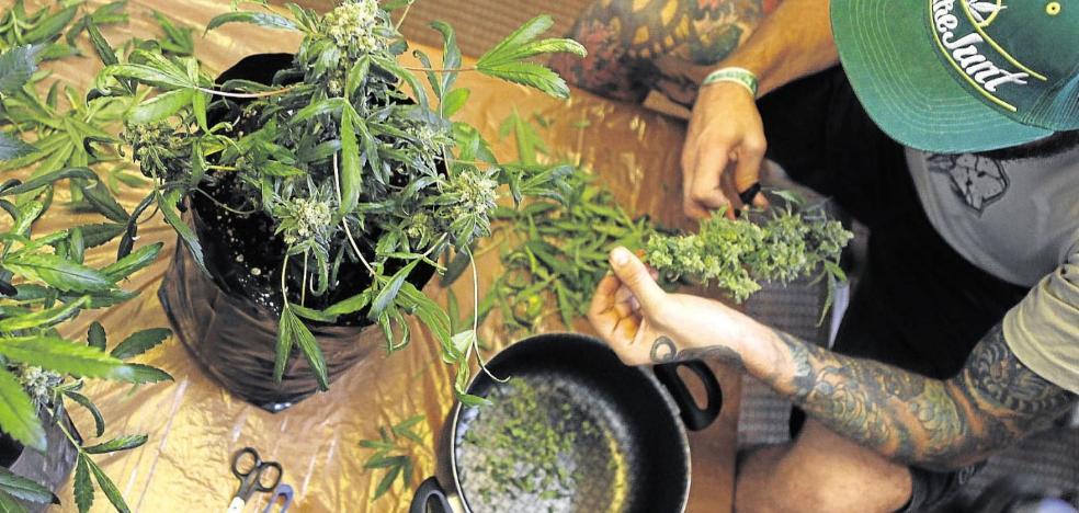 Uno de cada cinco toxicómanos que pide ayuda es por consumo de cannabis