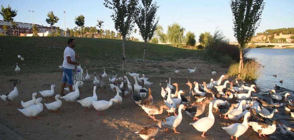 Las aves reinan en el parque del río Guadiana