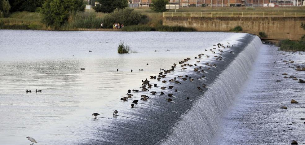 Badajoz será la próxima semana la capital nacional de la ornitología