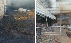 Dos caballos y un galgo mueren en el fuego de una parcela en Valdelacalzada