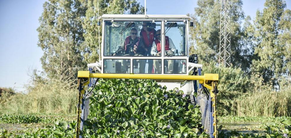 Un centenar de trabajadores se une a la retirada del camalote
