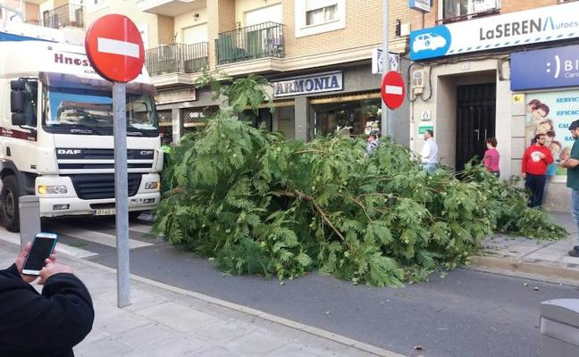 Un camión derriba un árbol en la calle San Francisco de Villanueva