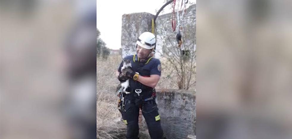 Los Bomberos de Badajoz rescatan a un gato atrapado en un pozo